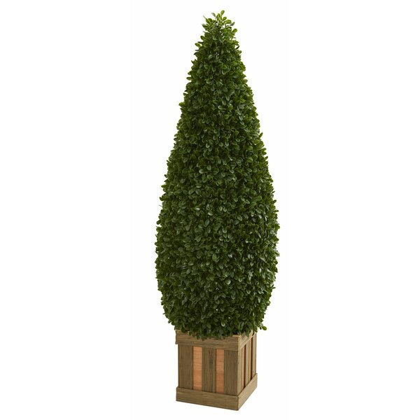 Cone Floor Boxwood Topiary in Decorative Planter by Canora Grey