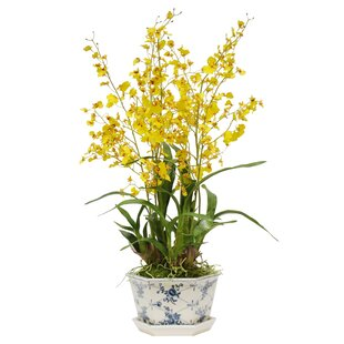 Image result for tiger orchid arrangements