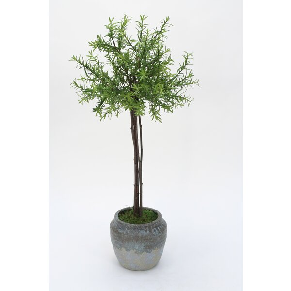 Thyme Floor Foliage Tree in Pot by Williston Forge