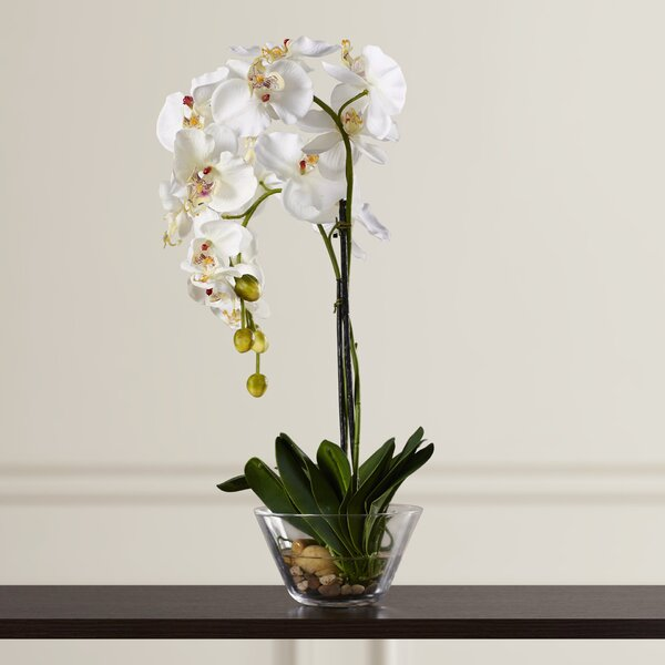Phalaenopsis Silk White Orchid in Glass Vase by Th