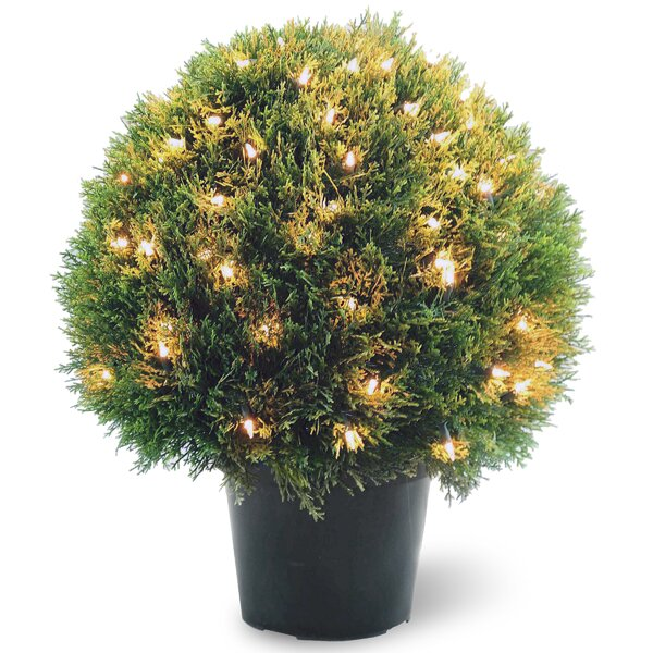 Pre-Lit Cedar Round Topiary in Pot by National Tree Co.