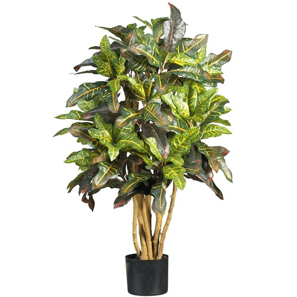 Croton Tree in Pot by World Menagerie