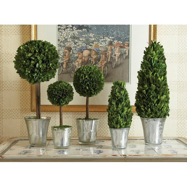 5 Piece Round Tapered Topiary in Pot Set by One Allium Way