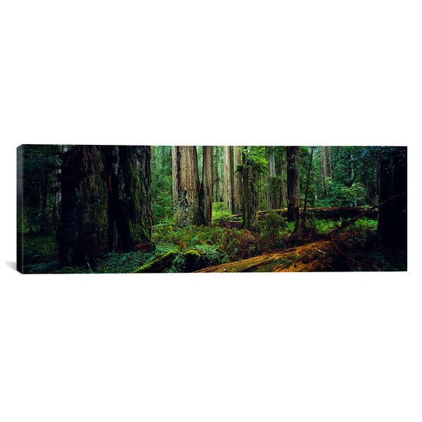 Panoramic Trees in a Forest, Hoh Rainforest, Olympic National Park, Washington State Photographic Print on Wrapped Canvas by iCanvas