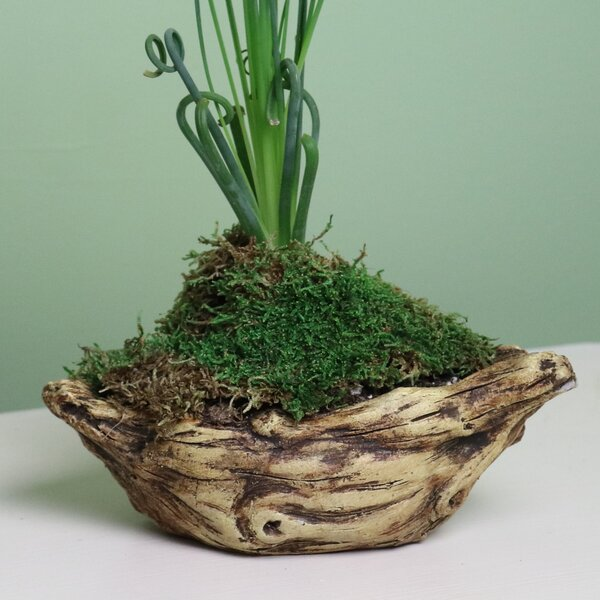 Paras Boat Log Concrete Pot Planter by Bloomsbury Market
