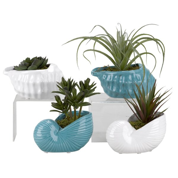 Mini Dracaena, Tilandsia, Succulent and Echeveria Ceramic Shell Floor Foliage Plant in Planter Set (Set of 4) by Highland Dunes