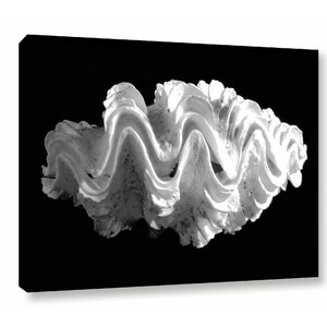 'Giant Frilled Clam Seashell Tridacna Squamosa' Photographic Print on Wrapped Canvas by Breakwater Bay