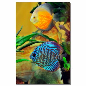 'Two Tropical Fish' by Kurt Shaffer Photographic Print on Wrapped Canvas by Trademark Fine Art