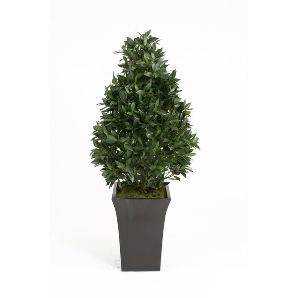 Laurel Pear-Shaped Topiary in Planter by Distinctive Designs