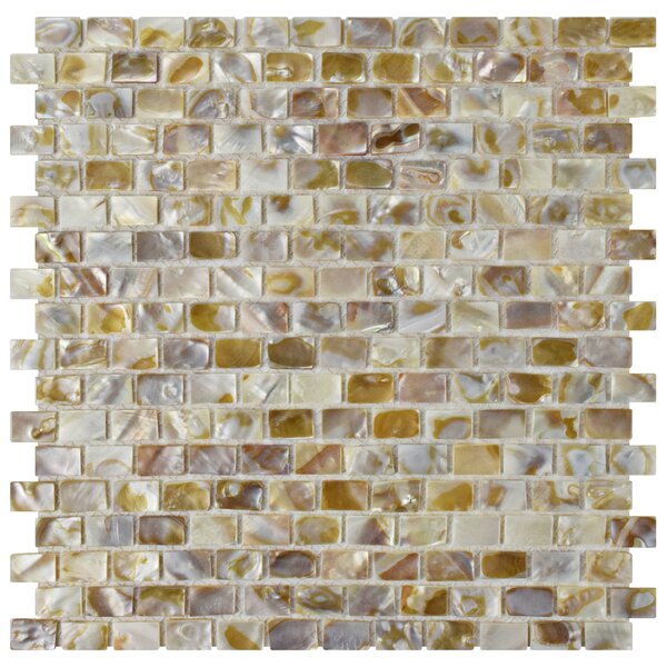 Shore 1 x 1 Seashell Mosaic Tile in Textured Natural shell by EliteTile