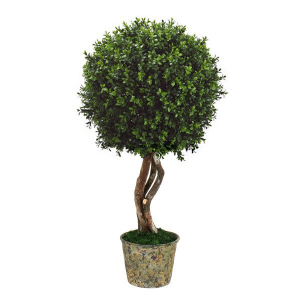 Desktop Boxwood Topiary by Fleur De Lis Living