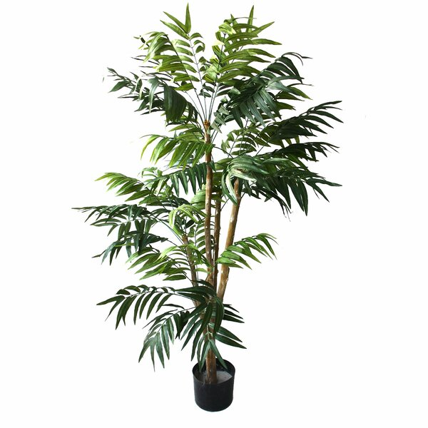 Tropical Palm Tree in Pot by Bloomsbury Market