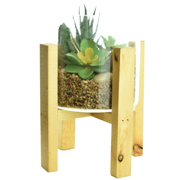 Terrarium Desktop Succulent Plant by Ivy Bronx