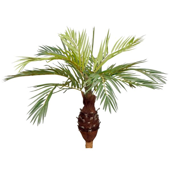 50 Phoenix Floor Palm Tree by Bay Isle Home