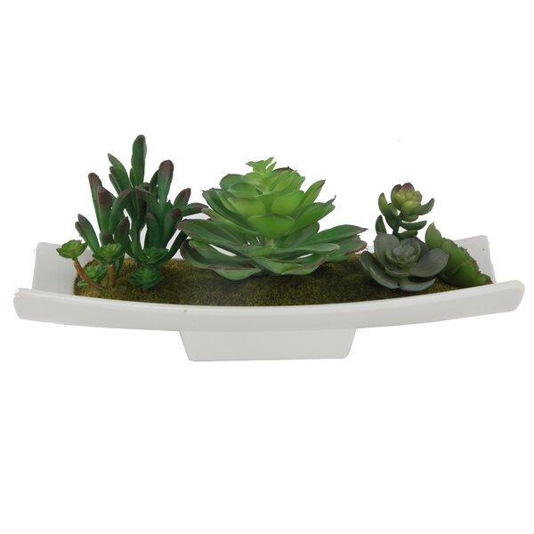 Desktop Succulent Plant by George Oliver