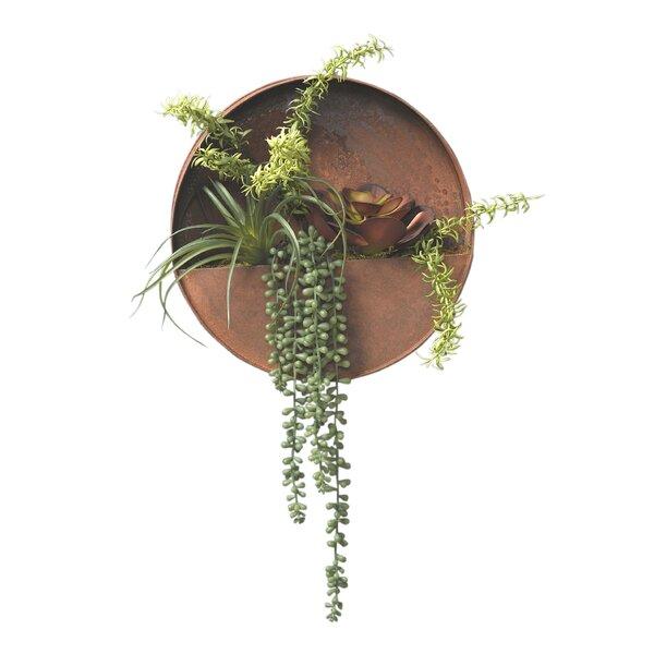 Round Metal Wall Hanging Succulent Plant by Brayden Studio