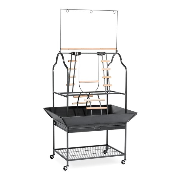 Parrot Playstand in Black by Prevue Hendryx