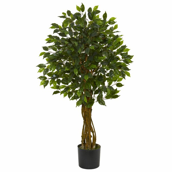 Ficus Plant by Darby Home Co