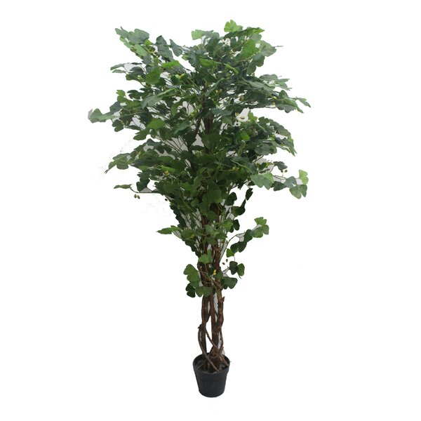 Ginkgo Floor Ficus Tree in Pot by Darby Home Co