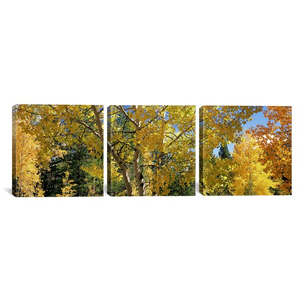 Aspen Trees in Autumn Colorado, USA 3 Piece Photographic Print on Wrapped Canvas Set by Alcott Hill