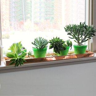 Window Sill Shelf Wayfair Ca