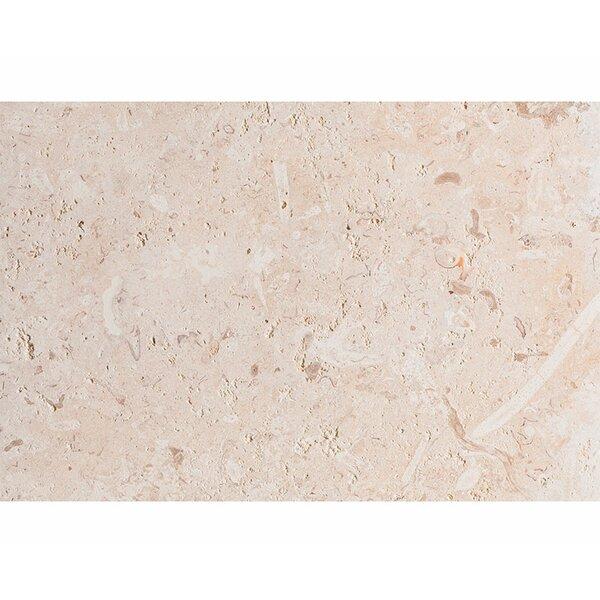ShellStone Tile 16 x 24 Seashell Field Tile in Beige by Parvatile