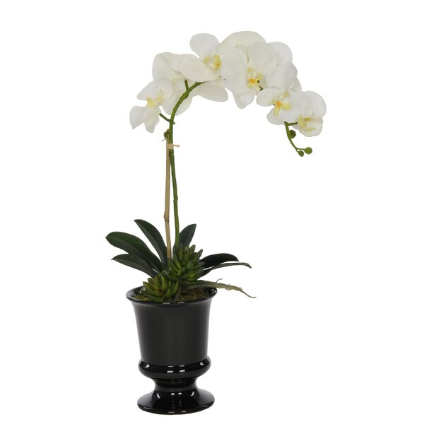Artificial Phalaenopsis Orchid in Urn by Winston Porter