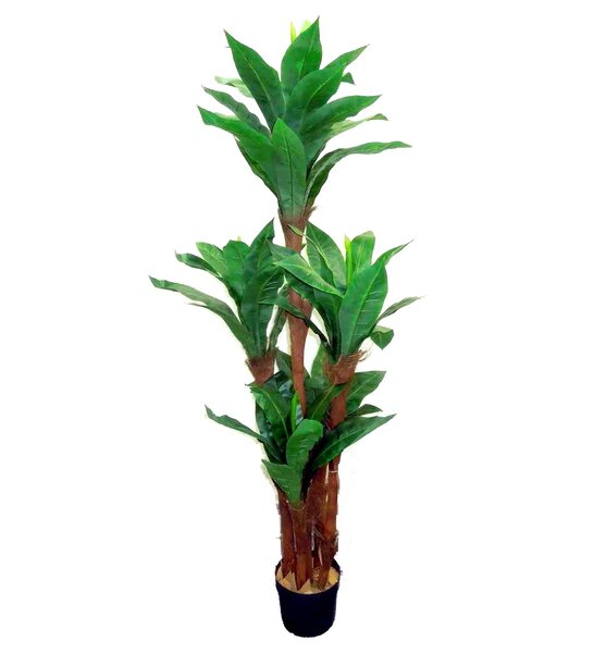 Foliage Bird Nest Tree Floor Plant in Pot by Admired by Nature