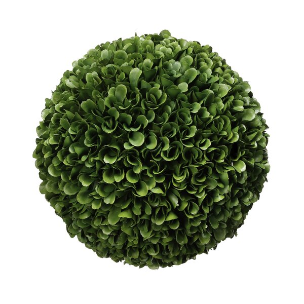 Ball Desktop Boxwood Plant by Alcott Hill