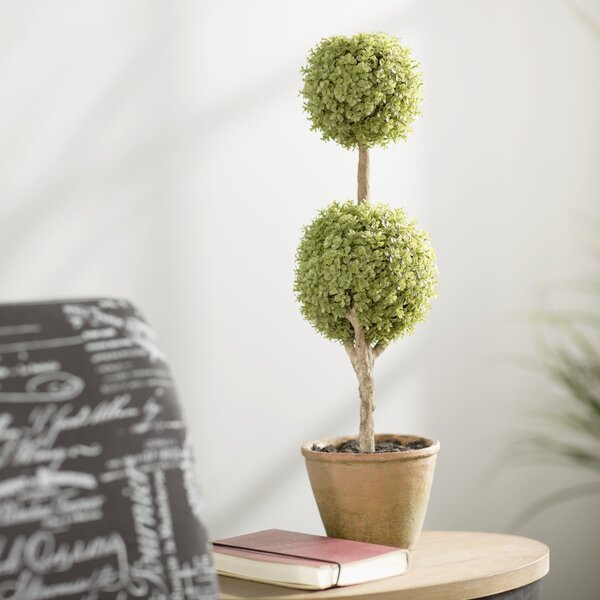 Green Double Ball Orchid Topiary in Pot by August Grove