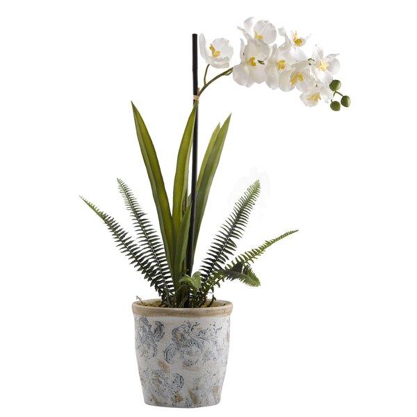 Vanda Orchids Floral Arrangement in Planter by Highland Dunes