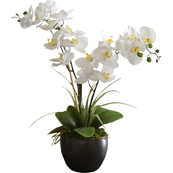 Silk Orchid Design in Bowl by World Menagerie