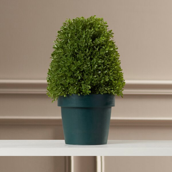 Eyre Boxwood Tree in Pot by Alcott Hill
