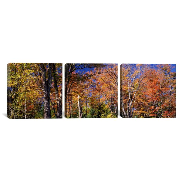 Trees in Autumn Vermont, USA 3 Piece Photographic Print on Wrapped Canvas Set by Alcott Hill