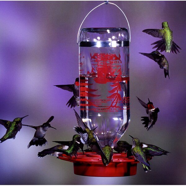 Bulk Hummingbird Feeder by Best-1