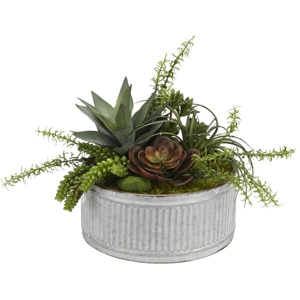 Echeveria, Aloe and Assorted Succulents in Tin Scculent Plant in Planter by Williston Forge