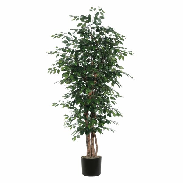 Fir Ficus Executive Tree in Pot by Alcott Hill