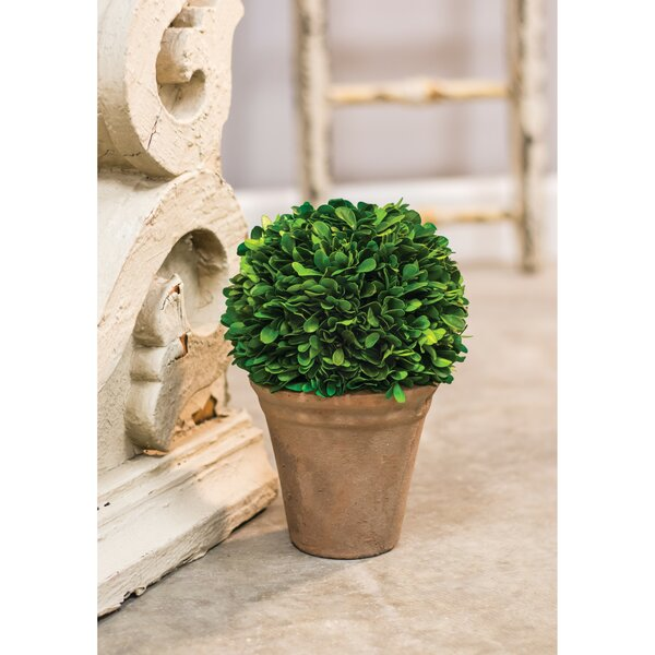 Desktop Boxwood Topiary in Pot by Charlton Home