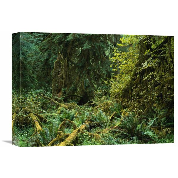 Nature Photographs Lush Vegetation in The Hoh Rain Forest, Olympic National Park, Washington Photographic Print on Wrapped Canvas by Global Gallery