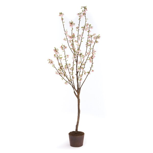 Cherry Blossom in Planter by One Allium Way