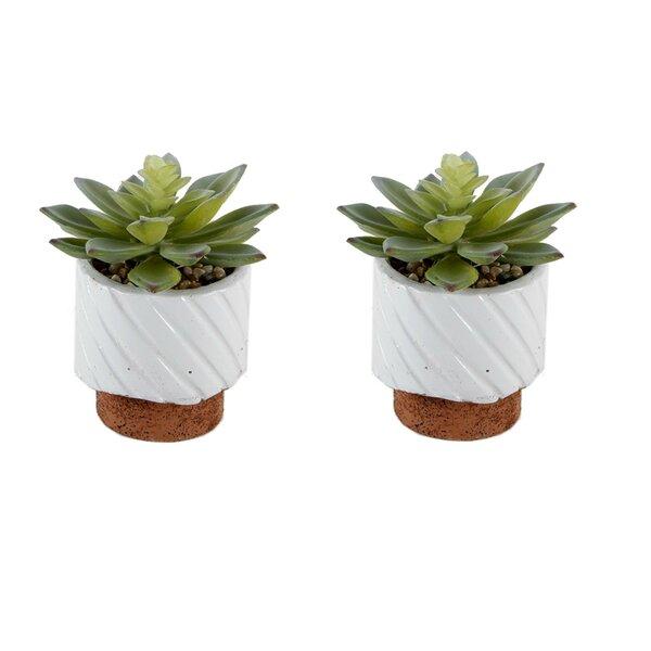 Desktop Succulent Plant in Pot (Set of 2) by Wrought Studio