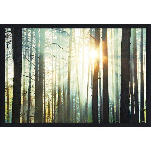 Sunset in the Woods Framed Photographic Print by Picture Perfect International