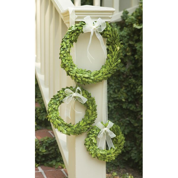 Preserved Greens 3 Piece Boxwood Wreath Set by Three Posts