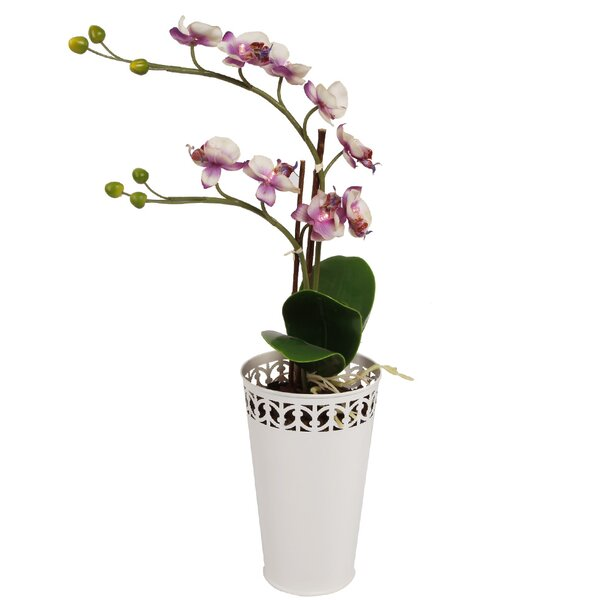 LED Orchid Floral Arrangement in Mental Pot by Bloomsbury Market