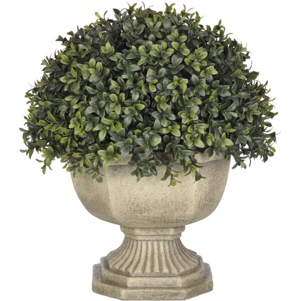 Faux Boxwood Half-Ball Topiary by Three Posts