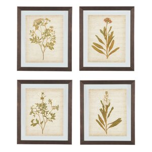 4 Piece Framed Painting Print Set by Alcott Hill