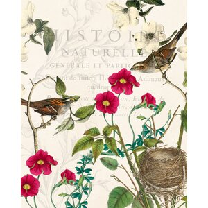 'Botanical Bird Collage' by Stacey Powell Graphic Art on Wrapped Canvas by Buy Art For Less