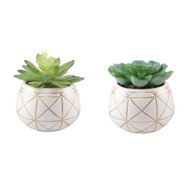 2 Piece Geo Succulent Plant in Pot Set by Bungalow Rose