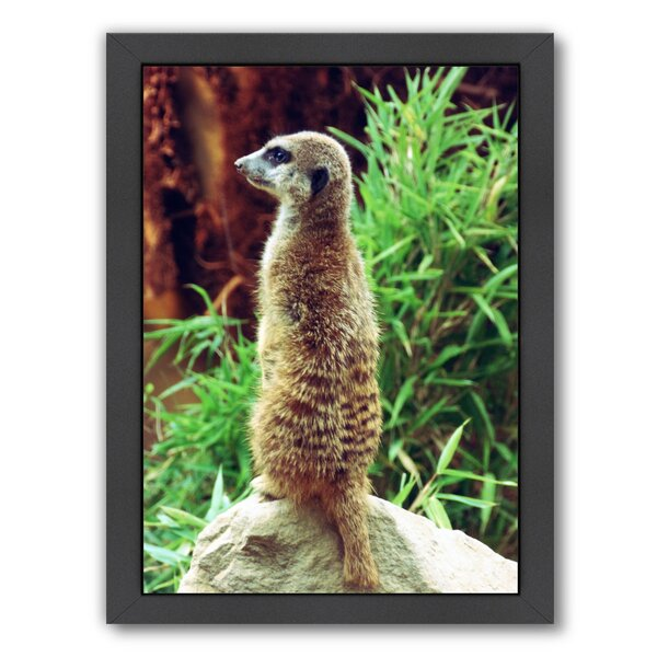 Wildlife Meerkat Mammal Framed Photographic Print by East Urban Home