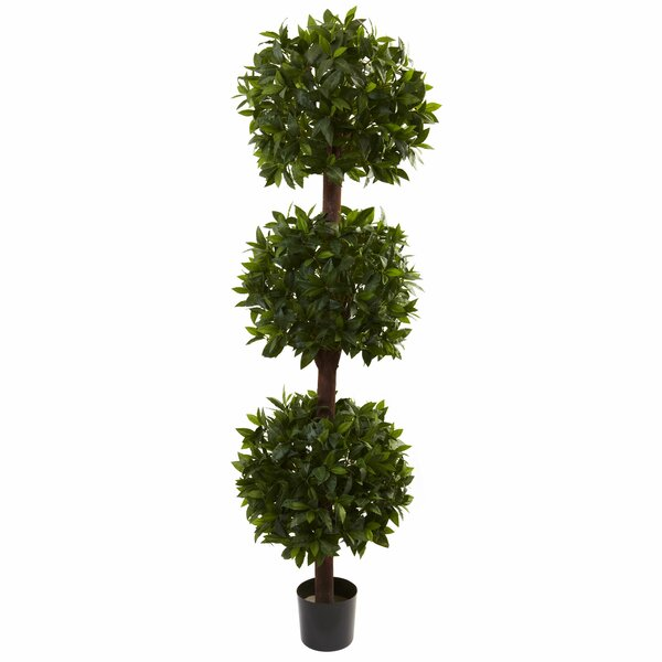 Sweet Bay Triple Ball Topiary in Pot by Darby Home Co